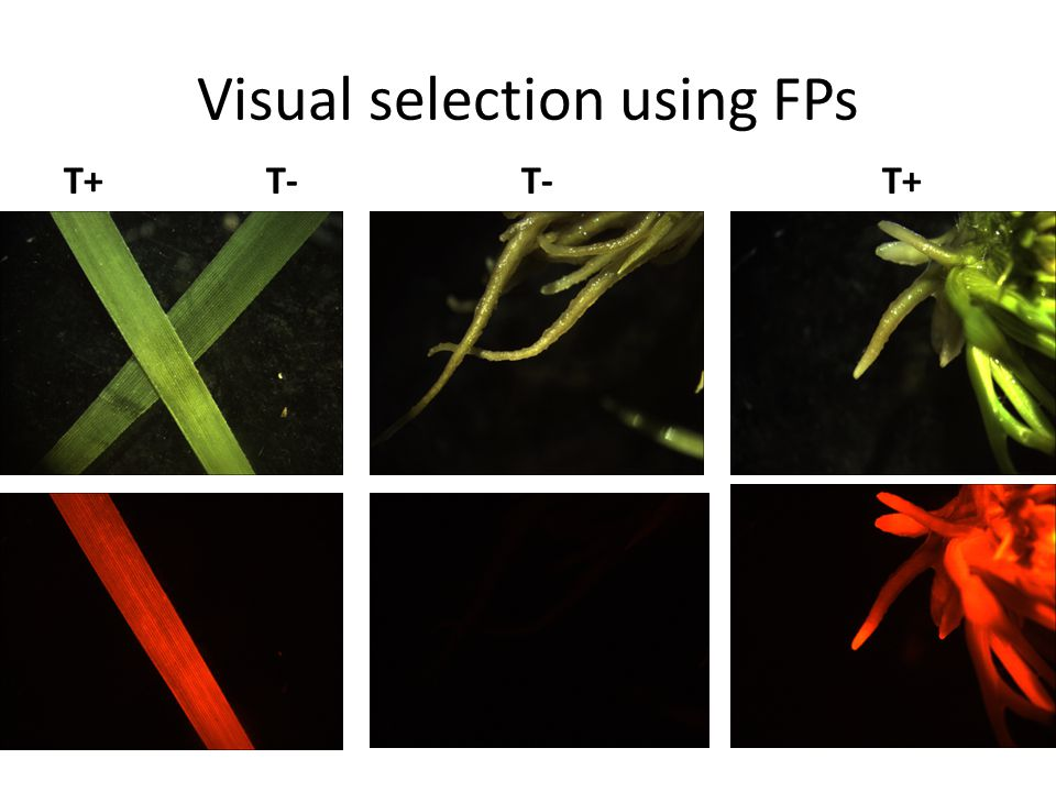 Visual selection using FPs