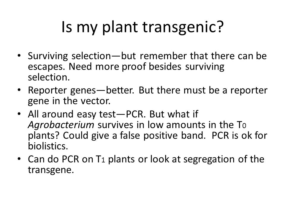 Is my plant transgenic Surviving selection—but remember that there can be escapes. Need more proof besides surviving selection.