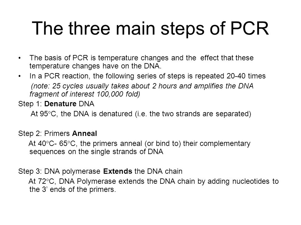 The three main steps of PCR