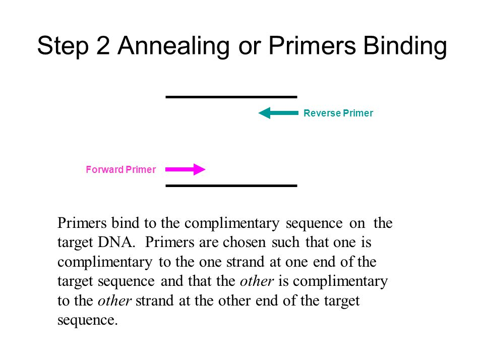 Step 2 Annealing or Primers Binding
