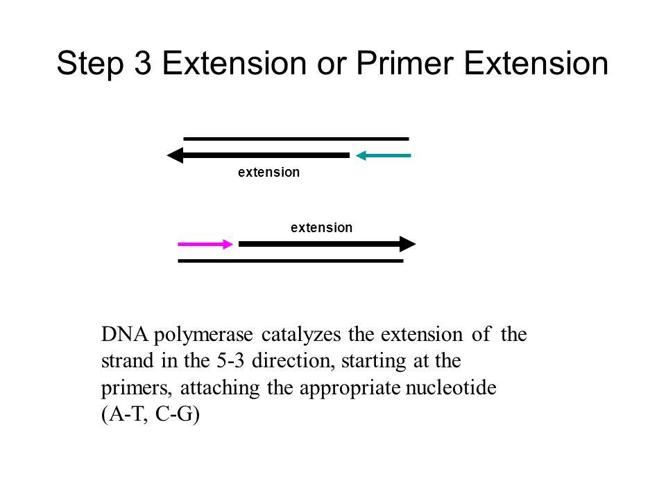 Step 3 Extension or Primer Extension