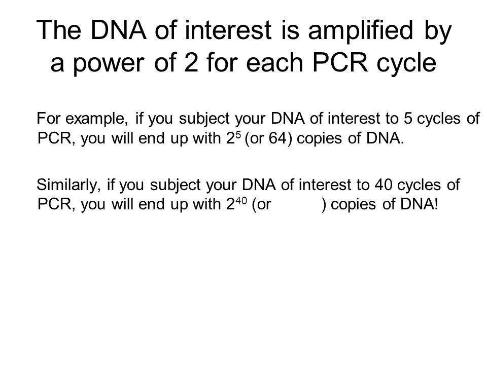 The DNA of interest is amplified by a power of 2 for each PCR cycle