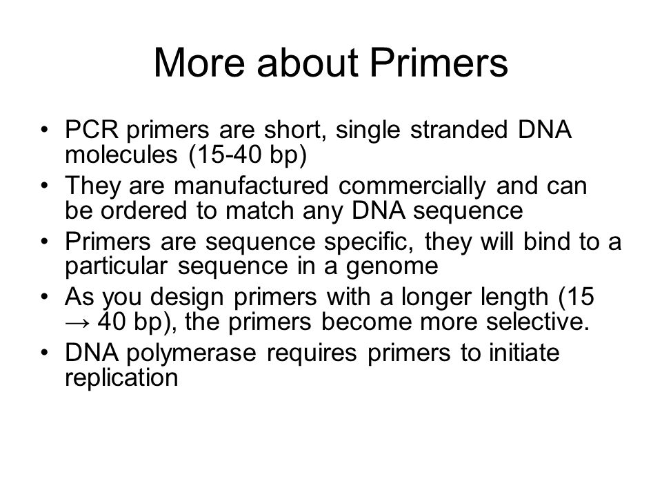 More about Primers PCR primers are short, single stranded DNA molecules (15-40 bp)