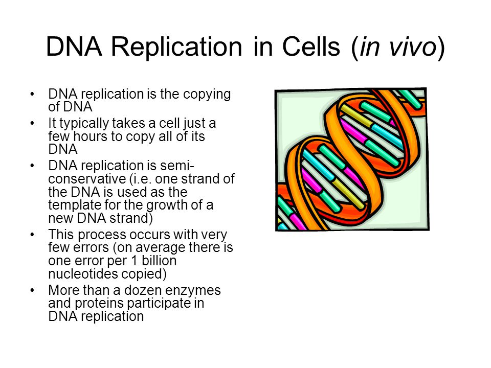 DNA Replication in Cells (in vivo)