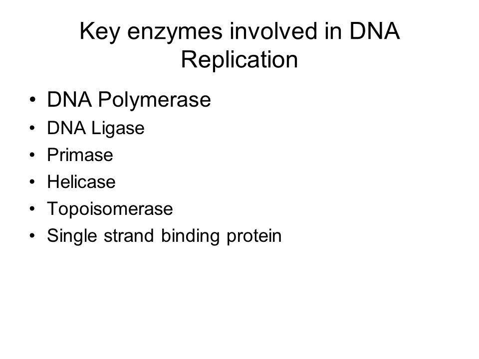 Key enzymes involved in DNA Replication