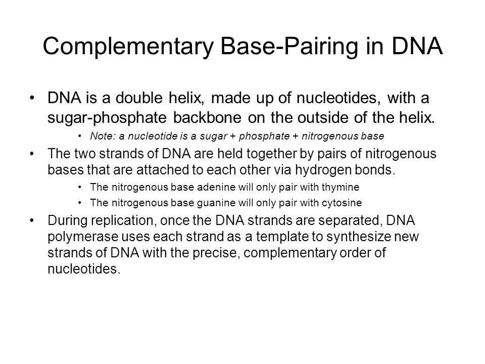 Complementary Base-Pairing in DNA
