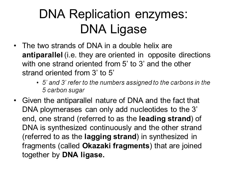 DNA Replication enzymes: DNA Ligase