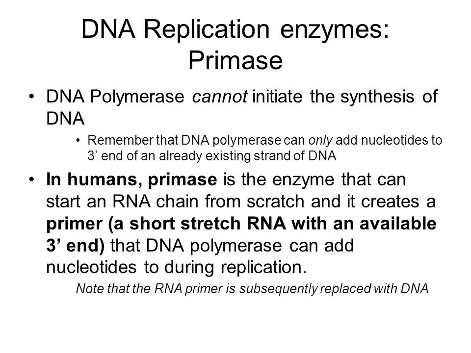DNA Replication enzymes: Primase