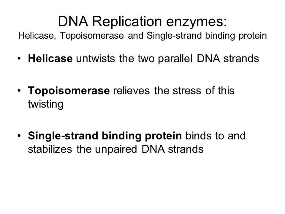 DNA Replication enzymes: Helicase, Topoisomerase and Single-strand binding protein