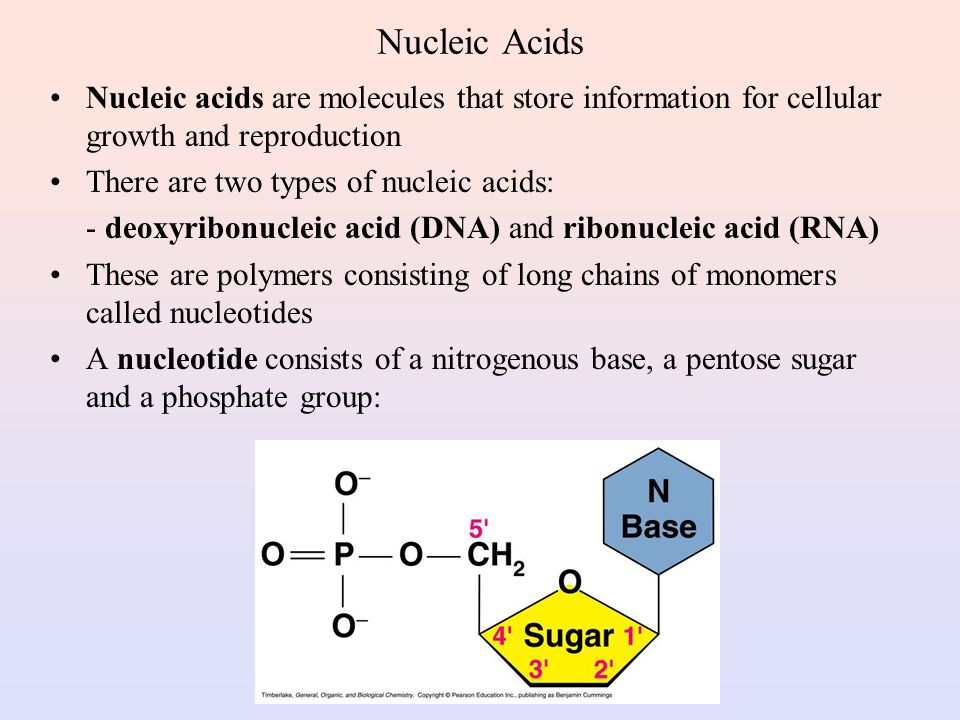Nucleic Acids Nucleic acids are molecules that store information for cellular growth and reproduction.