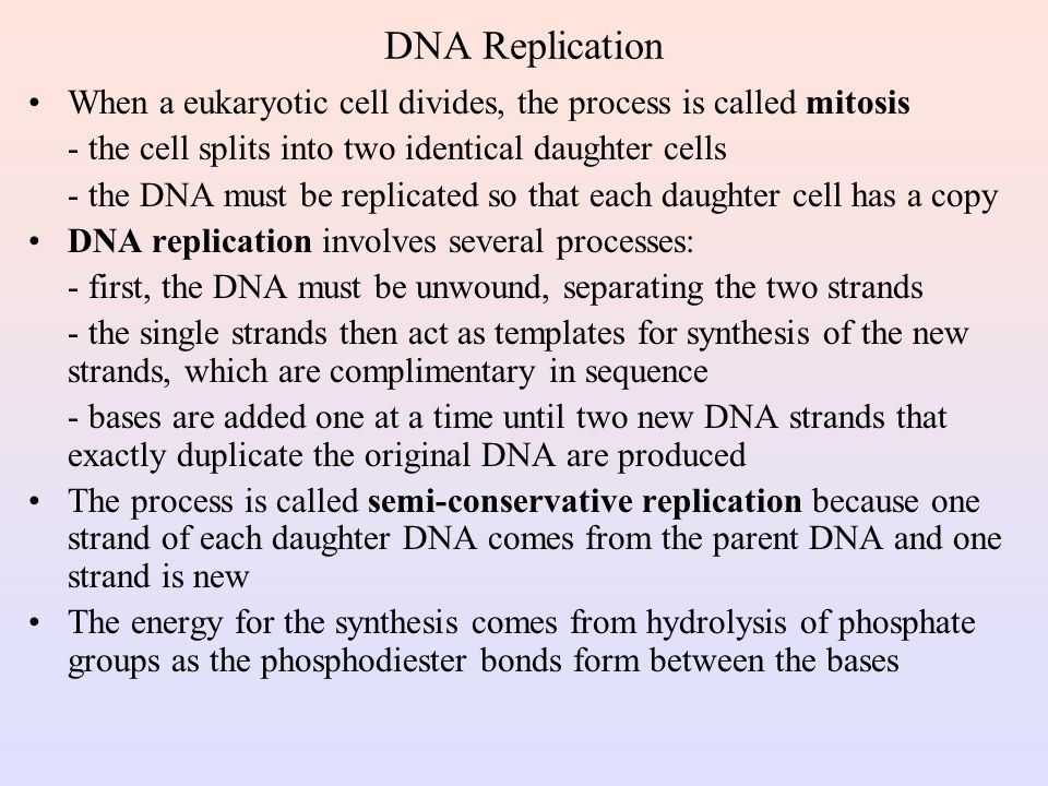 DNA Replication When a eukaryotic cell divides, the process is called mitosis. - the cell splits into two identical daughter cells.