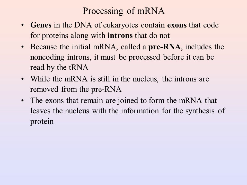 Processing of mRNA Genes in the DNA of eukaryotes contain exons that code for proteins along with introns that do not.