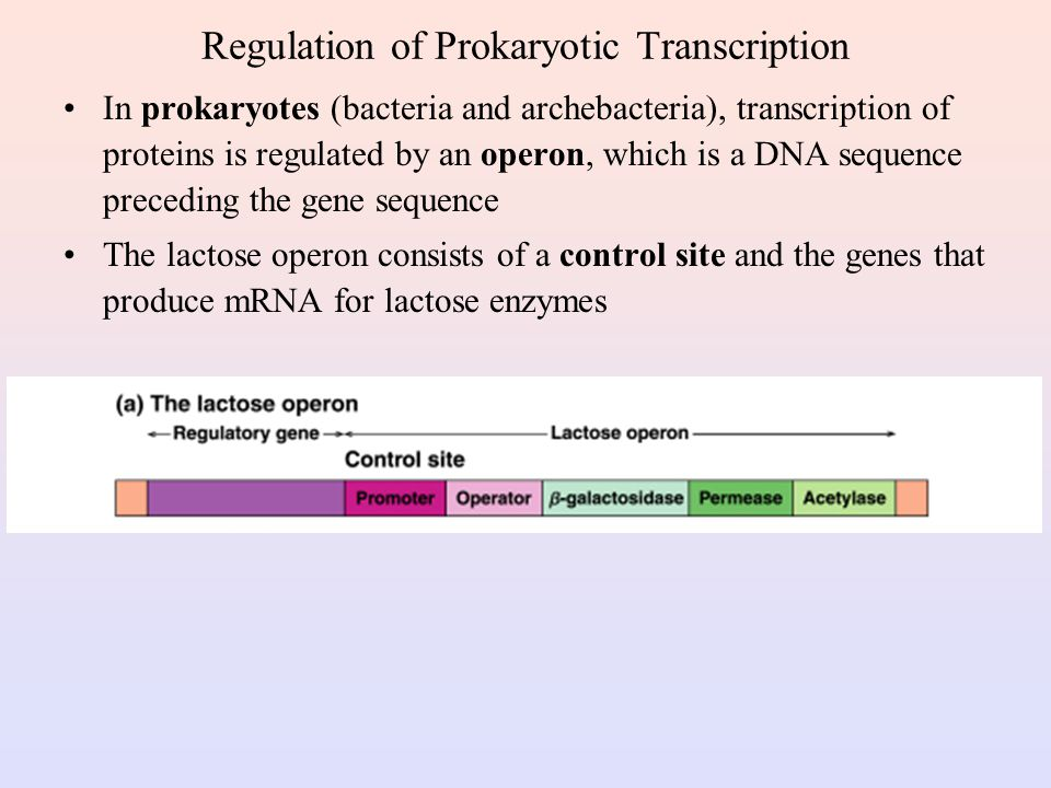 Regulation of Prokaryotic Transcription