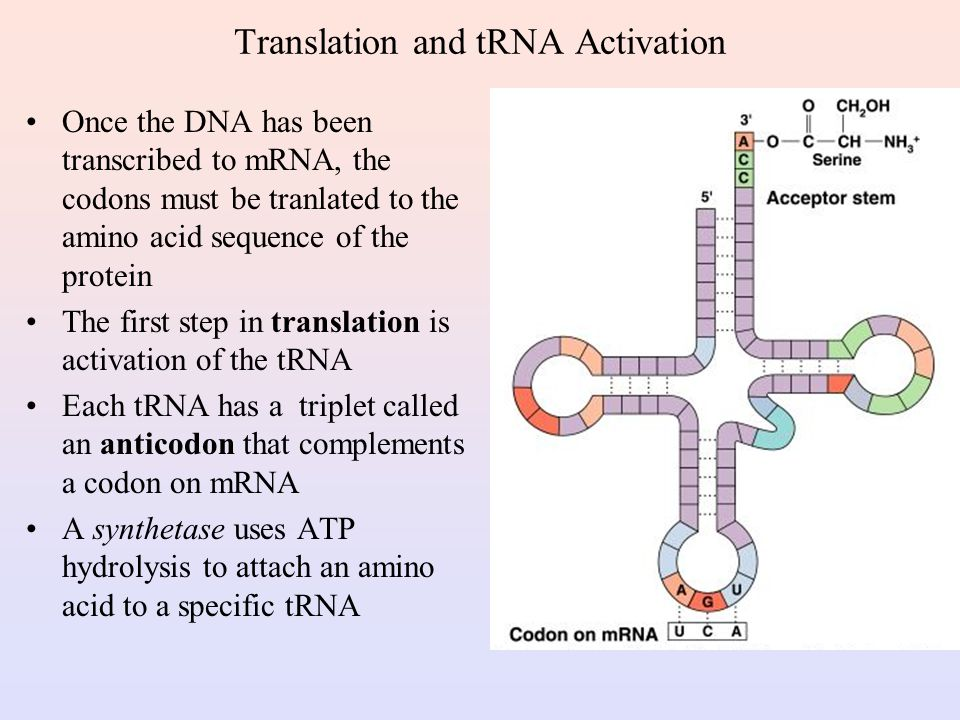 Translation and tRNA Activation