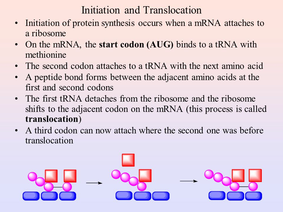 Initiation and Translocation