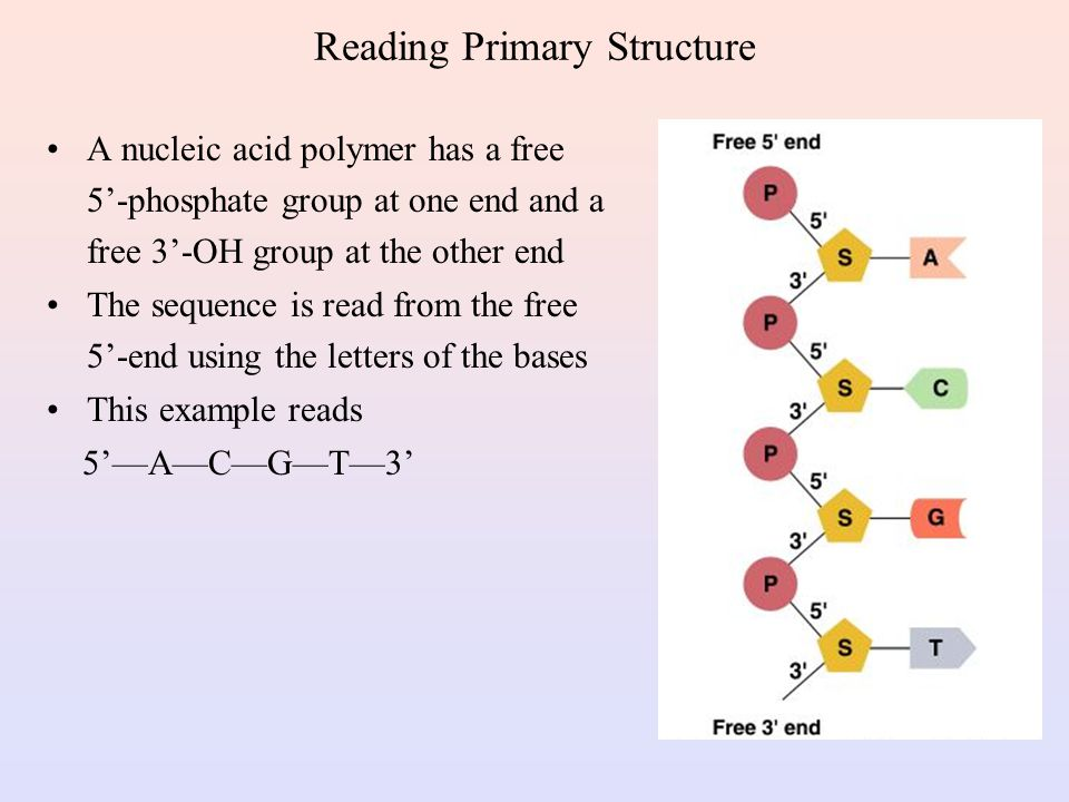 Reading Primary Structure