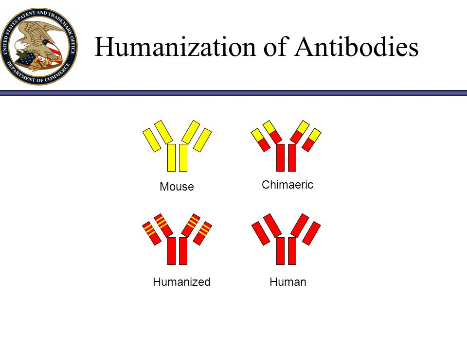 Humanization of Antibodies