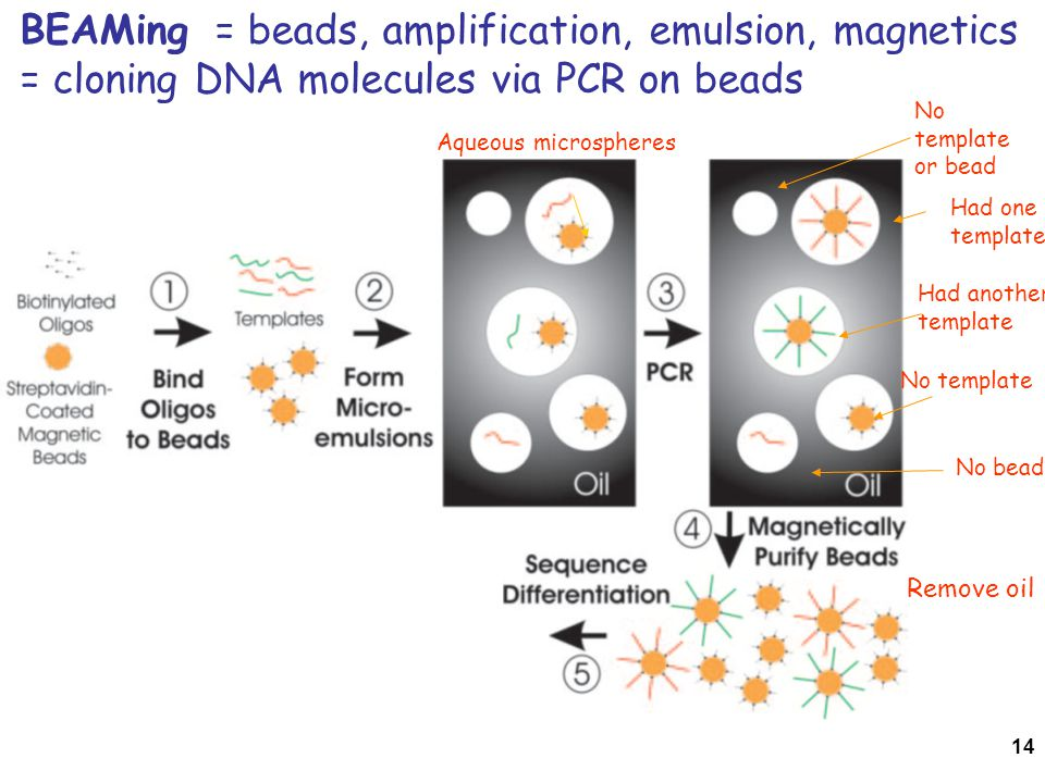 BEAMing = beads, amplification, emulsion, magnetics = cloning DNA molecules via PCR on beads