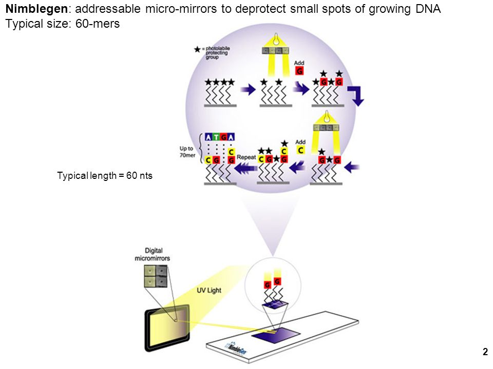 Nimblegen: addressable micro-mirrors to deprotect small spots of growing DNA