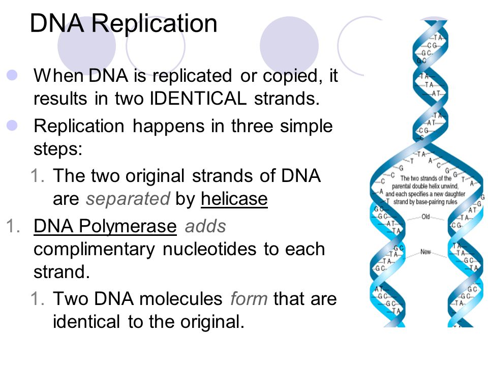 DNA Replication When DNA is replicated or copied, it results in two IDENTICAL strands. Replication happens in three simple steps: