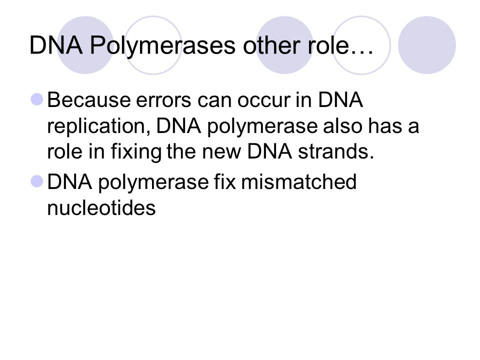 DNA Polymerases other role…