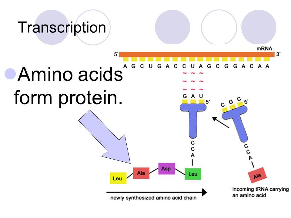 Amino acids form protein.