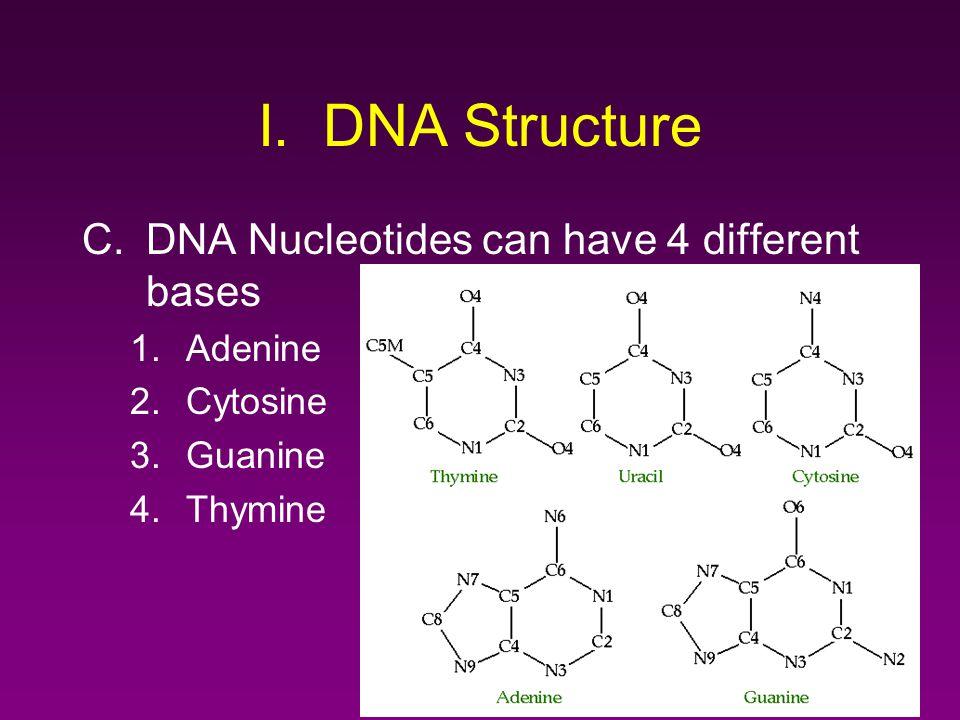 I. DNA Structure DNA Nucleotides can have 4 different bases Adenine