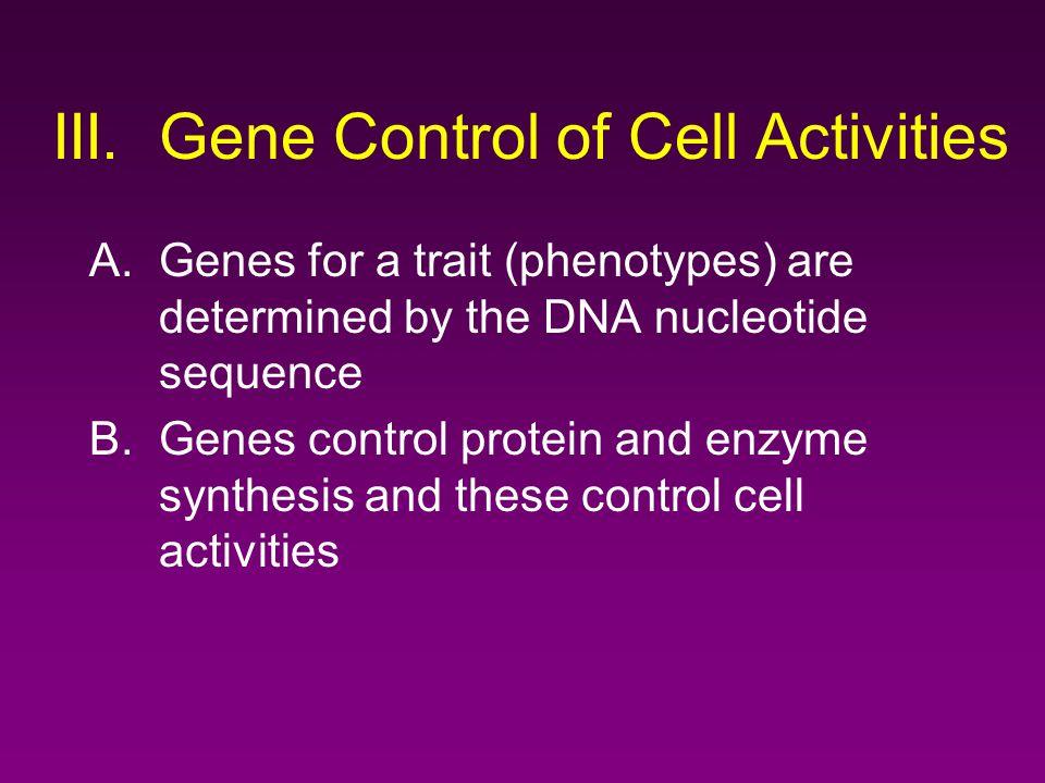 III. Gene Control of Cell Activities