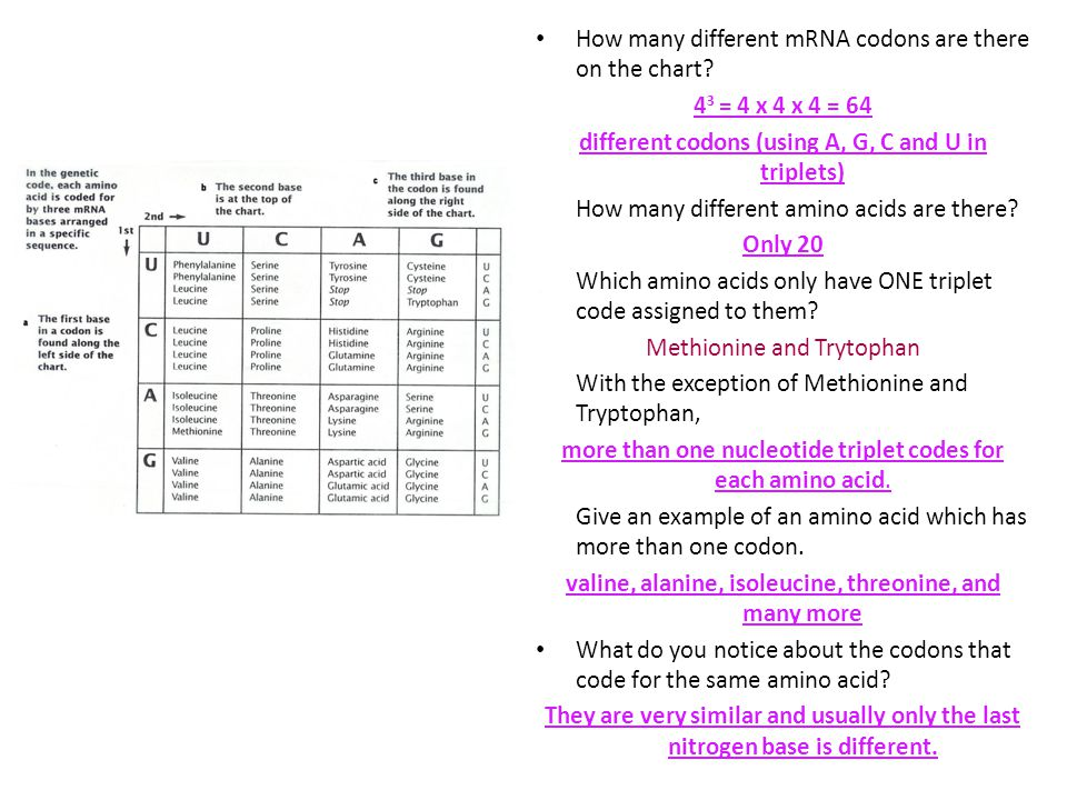 different codons (using A, G, C and U in triplets)