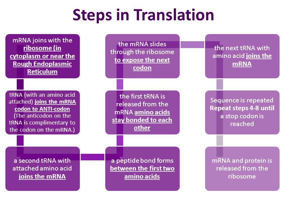 Steps in Translation mRNA joins with the ribosome (in cytoplasm or near the Rough Endoplasmic Reticulum.