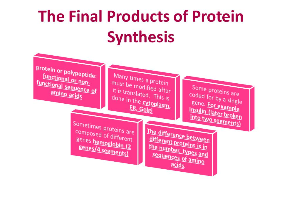 The Final Products of Protein Synthesis