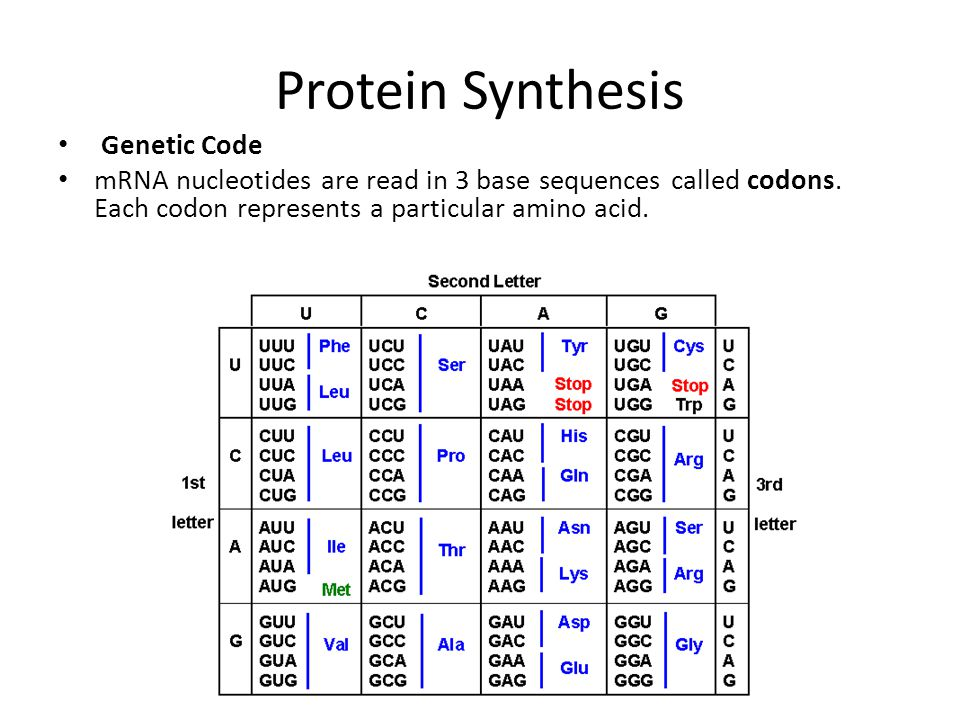 Protein Synthesis Genetic Code