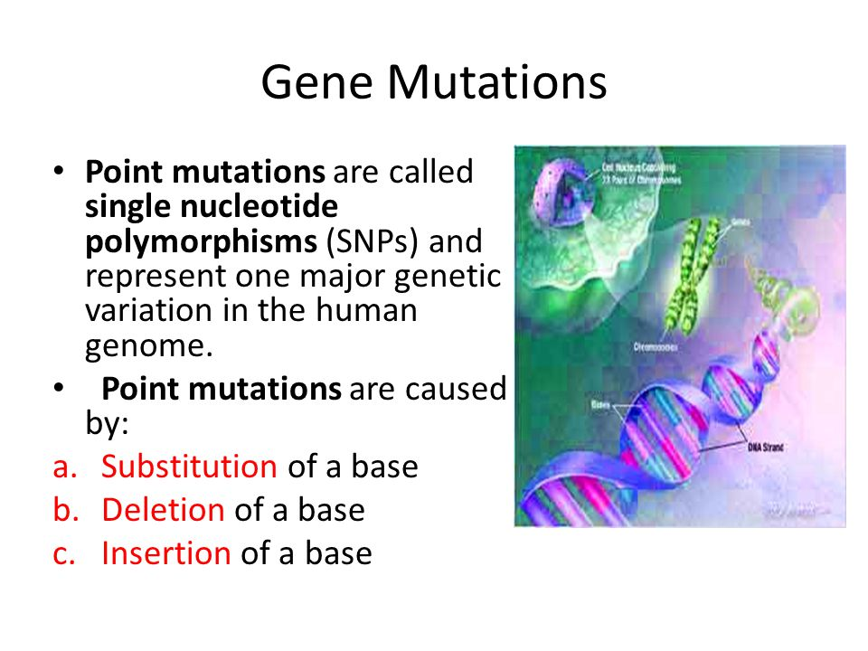 Gene Mutations Point mutations are called single nucleotide polymorphisms (SNPs) and represent one major genetic variation in the human genome.