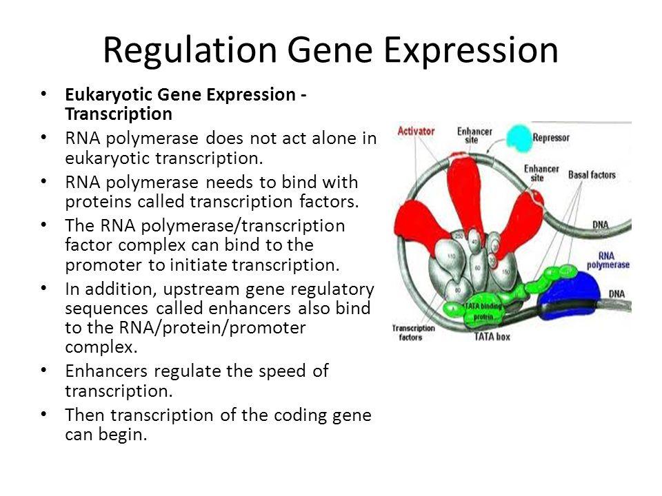 Regulation Gene Expression
