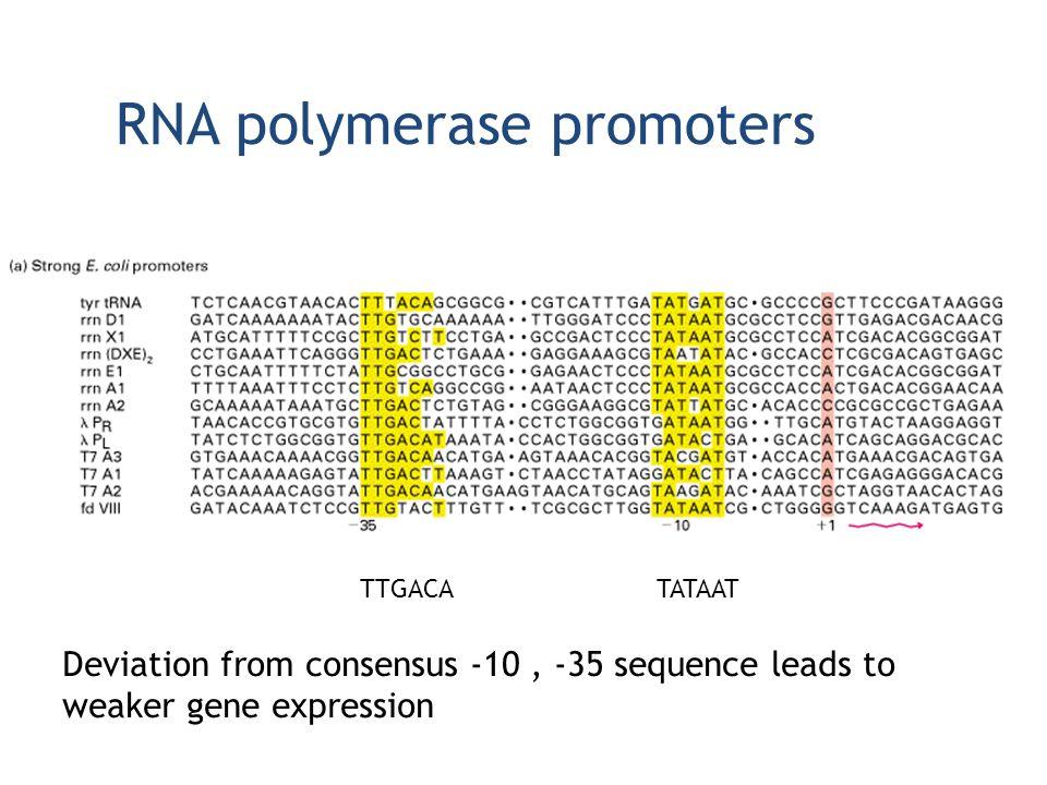 RNA polymerase promoters