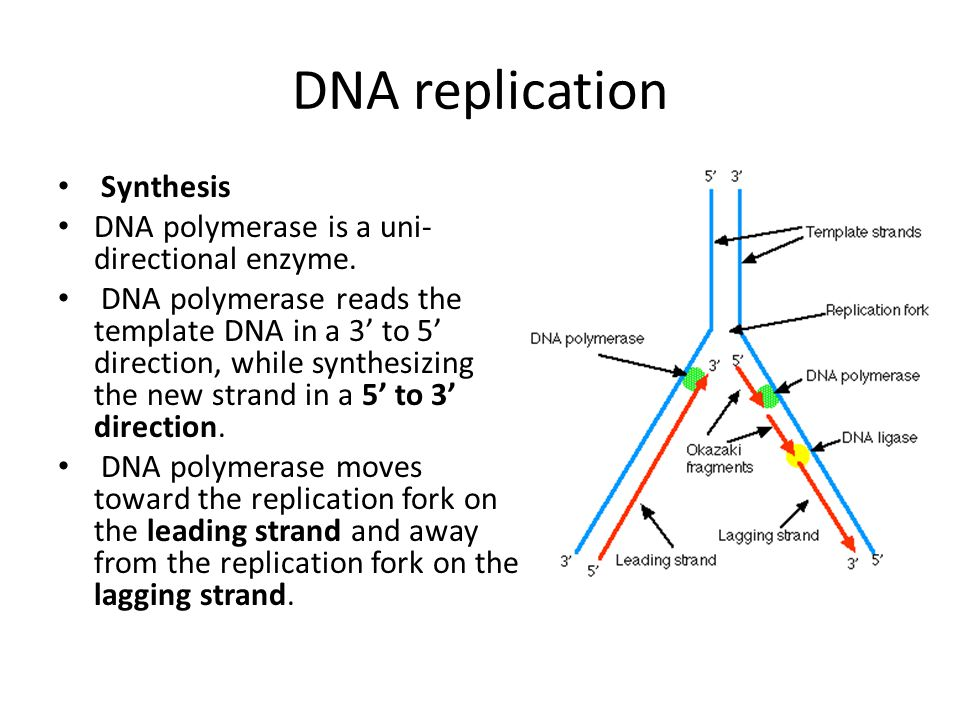 Genetics for biotechnology ppt video online download for What is a template in dna