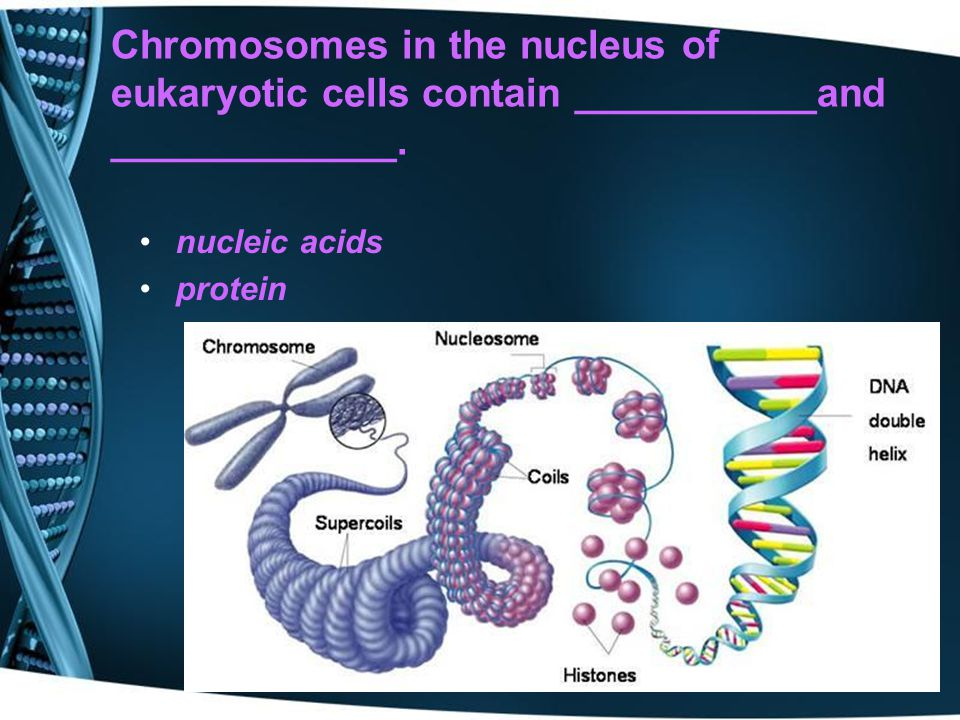 Chromosomes in the nucleus of eukaryotic cells contain ___________and _____________.