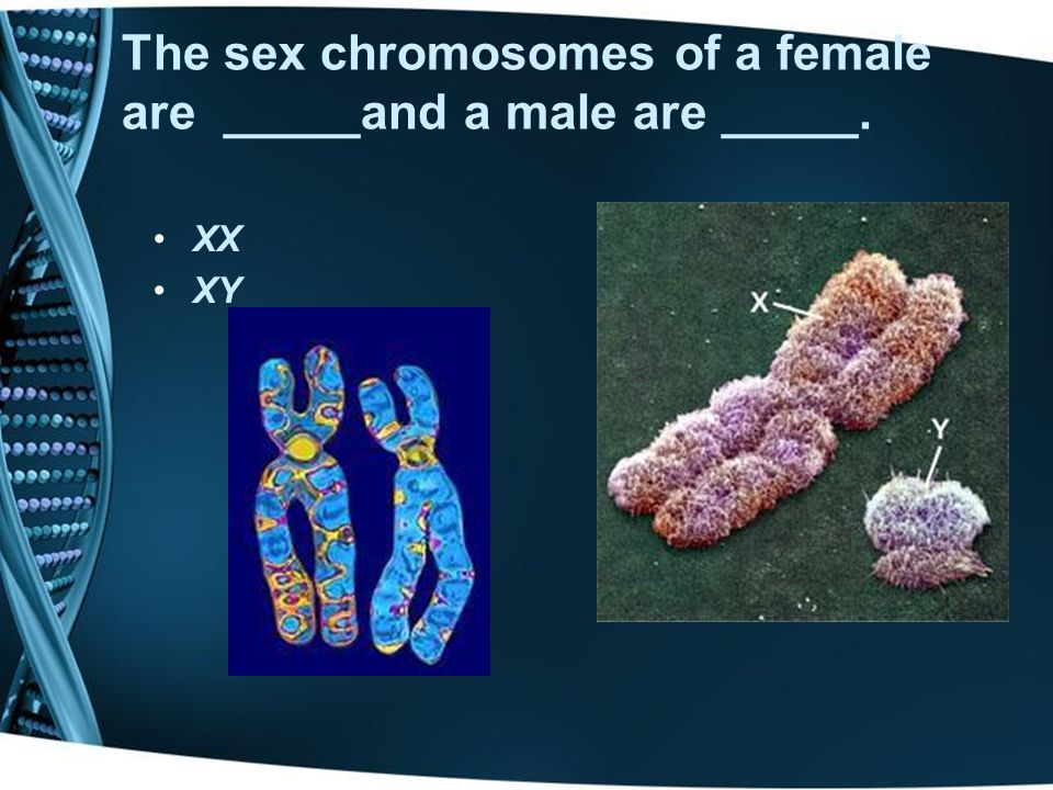 The sex chromosomes of a female are _____and a male are _____.