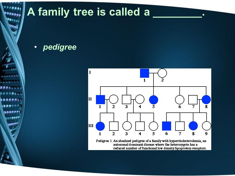 A family tree is called a ________.