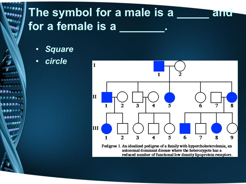 The symbol for a male is a _____ and for a female is a _______.