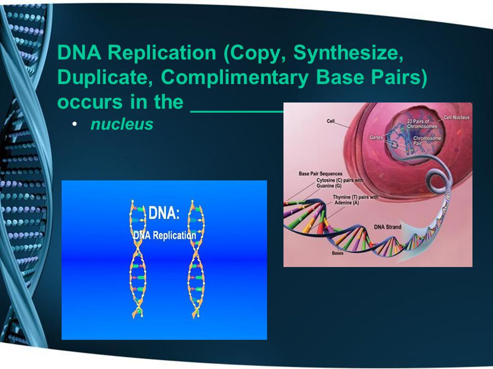 DNA Replication (Copy, Synthesize, Duplicate, Complimentary Base Pairs) occurs in the ___________,