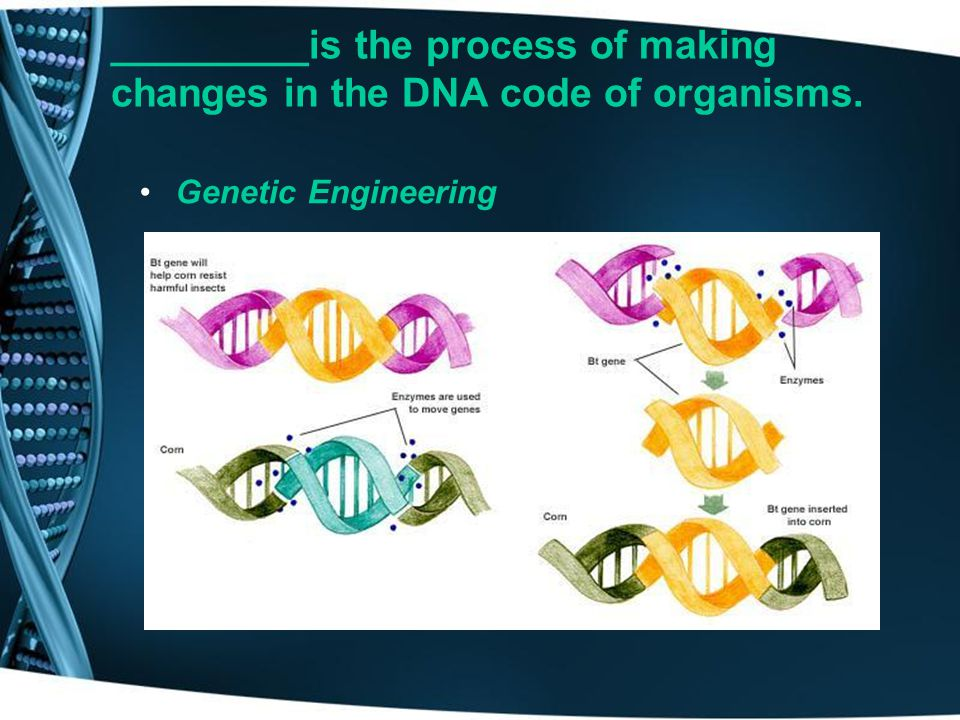 _________is the process of making changes in the DNA code of organisms.