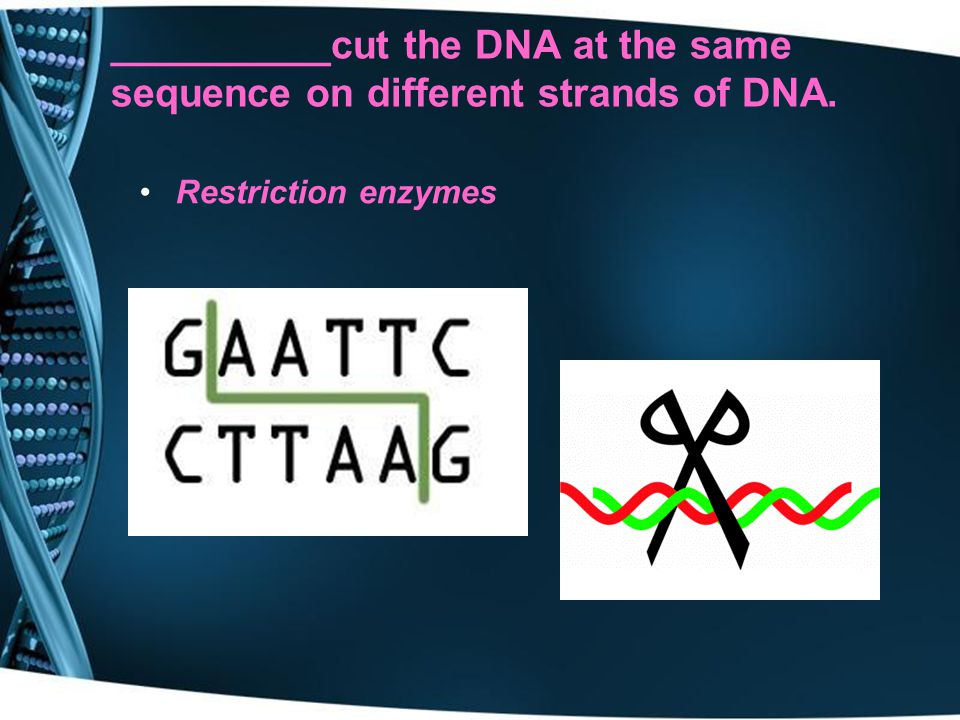 __________cut the DNA at the same sequence on different strands of DNA.