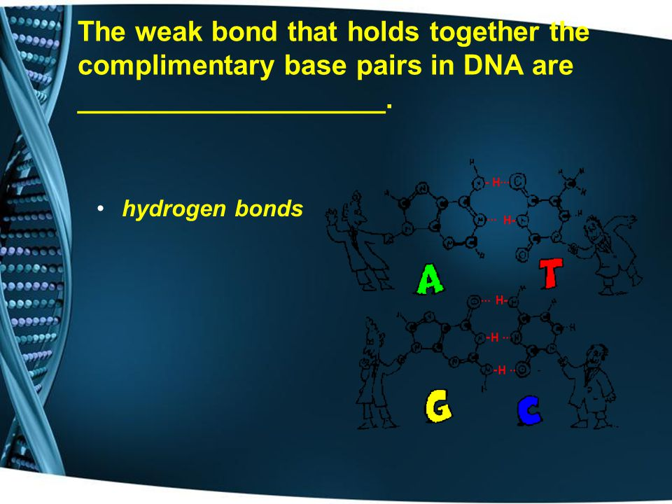 The weak bond that holds together the complimentary base pairs in DNA are ____________________.