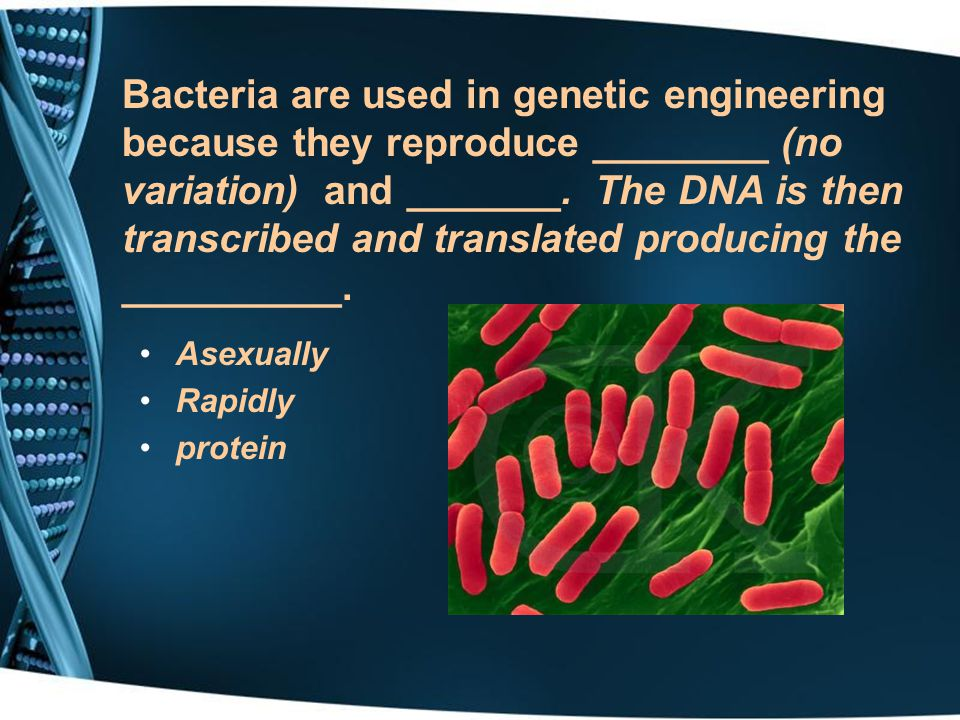 Bacteria are used in genetic engineering because they reproduce ________ (no variation) and _______. The DNA is then transcribed and translated producing the __________.