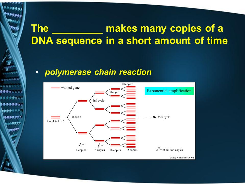 The _________ makes many copies of a DNA sequence in a short amount of time