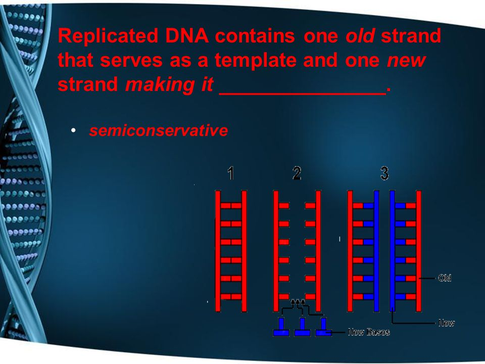 Replicated DNA contains one old strand that serves as a template and one new strand making it _______________.