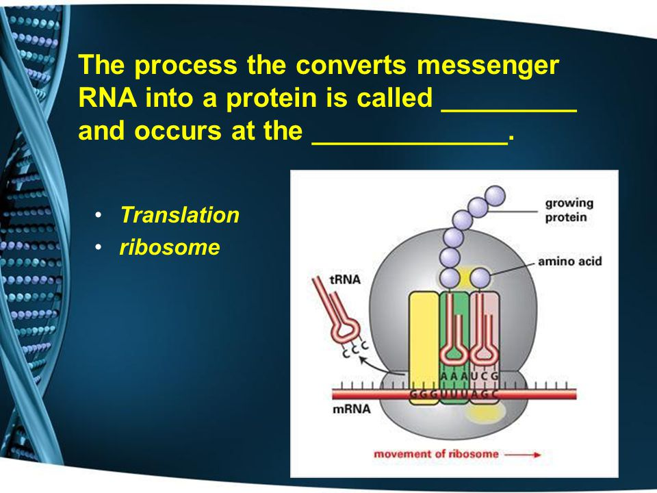 The process the converts messenger RNA into a protein is called _________ and occurs at the _____________.