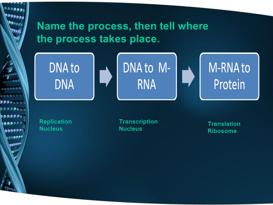 Name the process, then tell where the process takes place.
