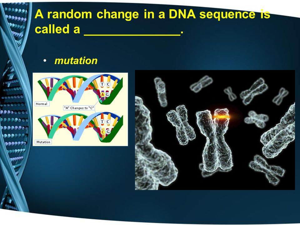 A random change in a DNA sequence is called a ______________.